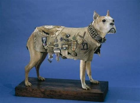 Sgt Stubby Most Decorated War The Story Of Sergeant Stubby Wwi S Most Decorated