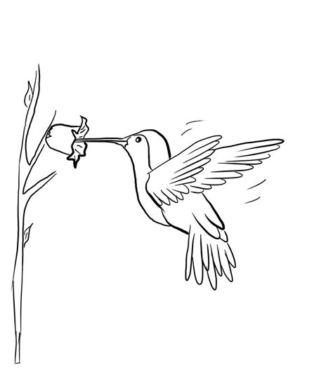 free printable hummingbird coloring pages kids