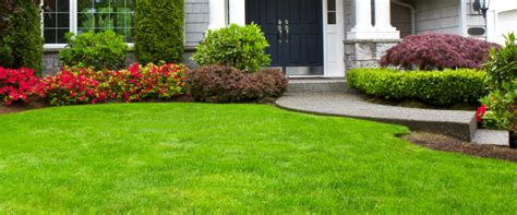 lawn maintenance landscaping in ta fl your green team