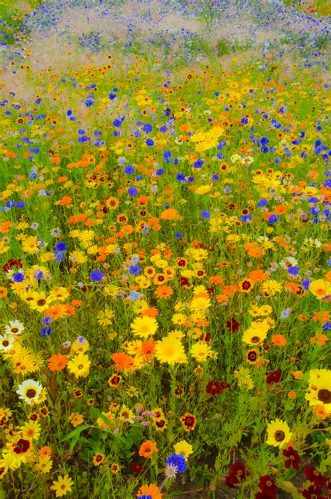Painting By Pigment And Light Pandaemonium Gustav Klimt Flower Garden