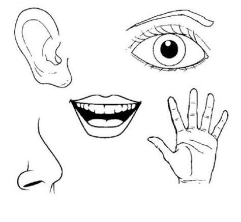 senses coloring pages preschool preschool five sense worksheets 2 171 funnycrafts