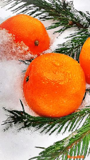 snowball oranges one mallorcan winter books todd san diego ca s review of winter oranges