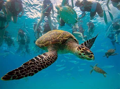 imagenes animales acuaticos animales acuaticos im 225 genes taringa
