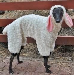22 funny dog costumes halloween brit