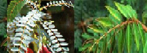 gerak  tumbuhan beserta gambar biologi asyik feat fkip