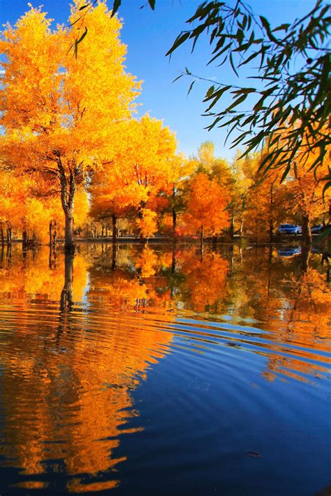 wallpaper iphone fall fall reflection iphone wallpaper hd