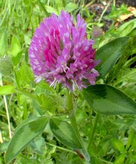 Purple Cover by Purple Clover Www Pixshark Images Galleries