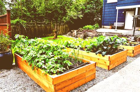home vegetable garden plans homes floor ideas india best
