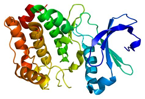 protein molecular structure promising proteins scientists develop new discovery