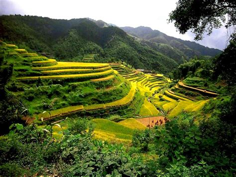 rice terraces  southeast asia  china facts pod