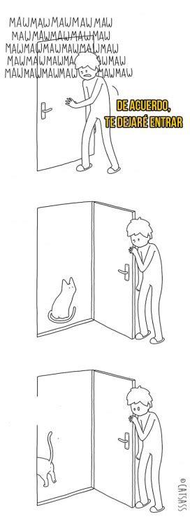 10 pensamientos que tiene tu gato cada vez que apareces 10 pensamientos que tiene tu gato cada vez que apareces