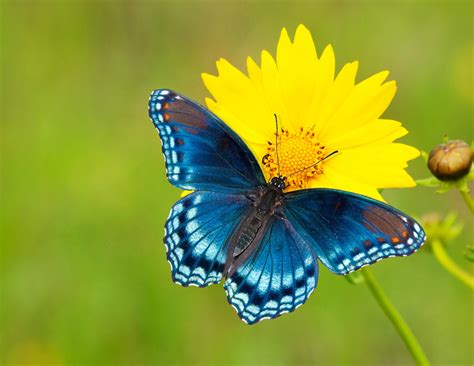 imagenes de mariposas national geographic 5 tips for photographing butterflies mnn mother nature