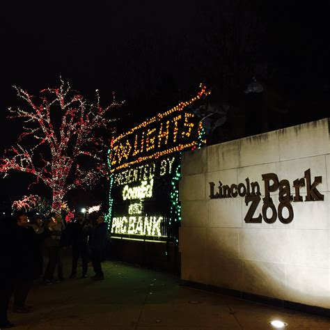 brew lights lincoln park zoo zoo lights at lincoln park zoo stella s out