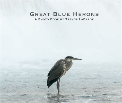 i asked the blue heron books great blue herons by trevor labarge arts photography
