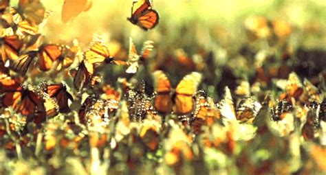 Beautiful Butterflies Pictures, Photos, and Images for