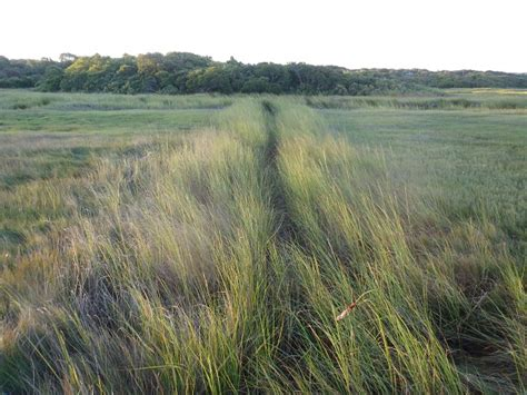 cape cod mosquito depression era drainage ditches emerge as sleeping threat