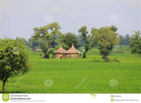imagenes de la vida rural vida rural en la india cos de trigo y peque 241 as chozas
