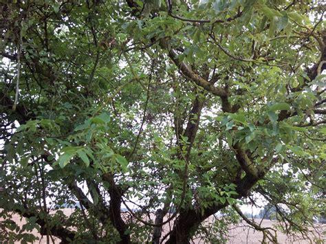 Tali Rami Lu struttura dell albero verde garden