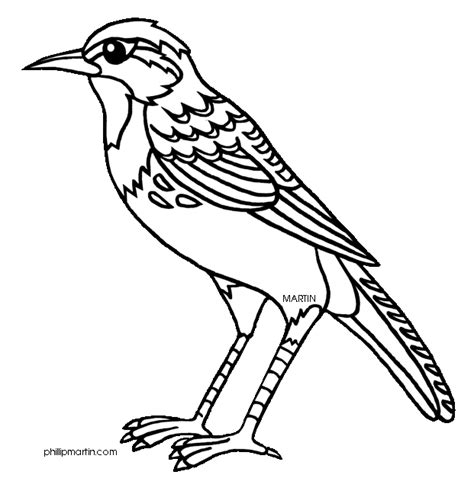 K State Coloring Pages by Kansas State Bird Coloring Page Coloring Pages For Free