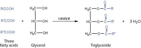 fats  oils chemistry libretexts