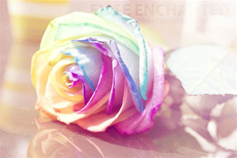 Colorful Roses Wallpaper In Romantic Roses | rainbow rose by eliseenchanted on deviantart