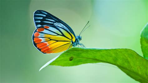 butterfly colors decoding a butterfly s colours nus news