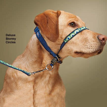 gentle leader harness 73 best images about lab on crates gifts and beds