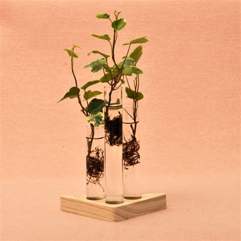 Indoor Plant Vases by Test Shaped Glass Vase Clear Flower Plant Creative