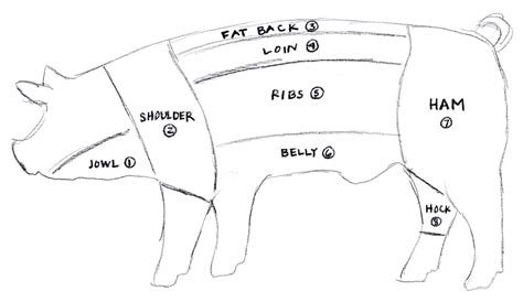pig sections pig diagrams to print diagram site