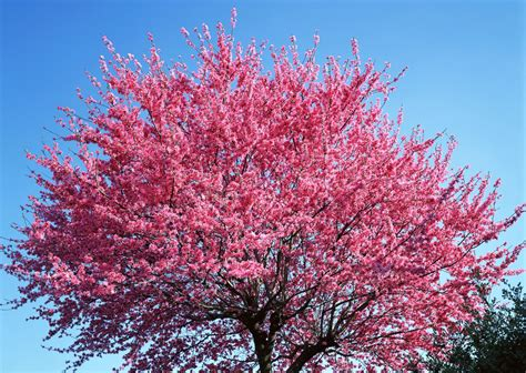 hd wallpapers beautiful tree