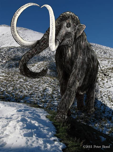 mammoth images bond s woolly mammoth image