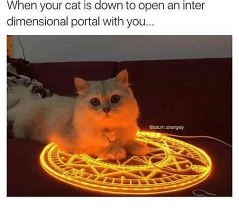 Dank Cat Memes - when your cat is down to open an inter dimensional portal with you strangely cats meme on sizzle
