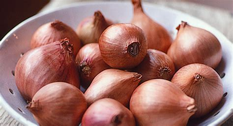 allium  homesteading guide  onions garlics chives