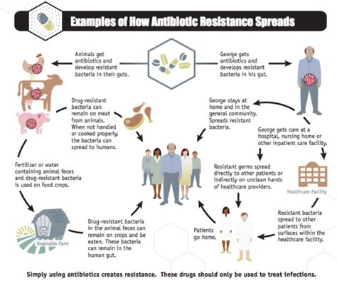 Fast Food Feeding Or Killing Essay by This Flowchart Explains Where Antibiotic Resistance Comes From Salon