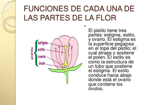 Tope Color by Partes De Una Flor