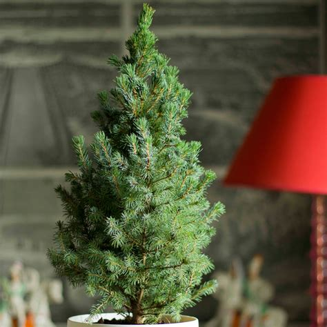 buy tabletop living green christmas tree and white pot