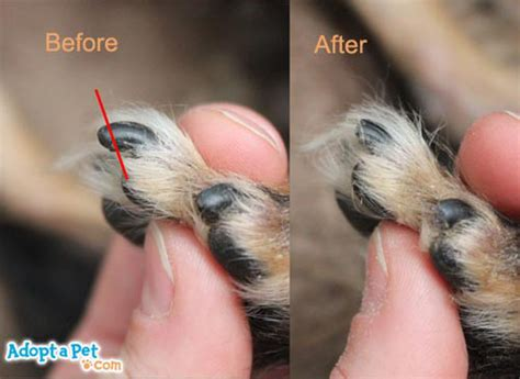 how to cut a dogs nails how to trim your s nails 187 adoptapet