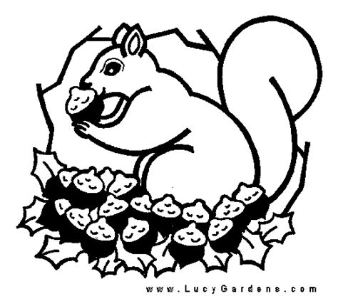 squirrel mario coloring pages squirrel coloring page clipart panda free clipart images