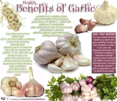 7 Reasons Why Garlic Is For You by Rajesh Reviews Is Garlic For You