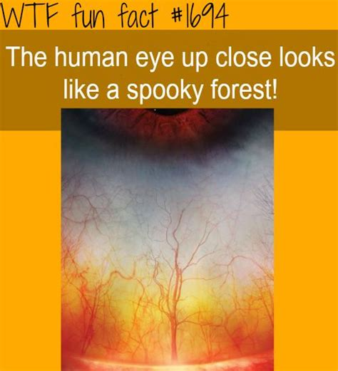 50 wacky things humans do amazing facts about the human wacky series books a up human facts creepy