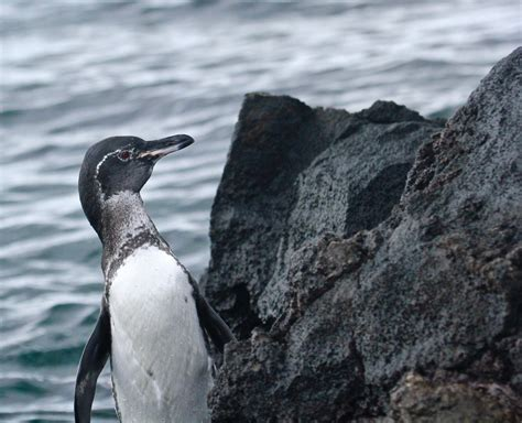 7 Amazing Animals From The Galapagos Islands by 10 Amazing Animals To See In The Gal 225 Pagos Islands