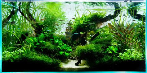Aquascape Ada by Aquarium Design 90cm Ada Aquascape Aquarium