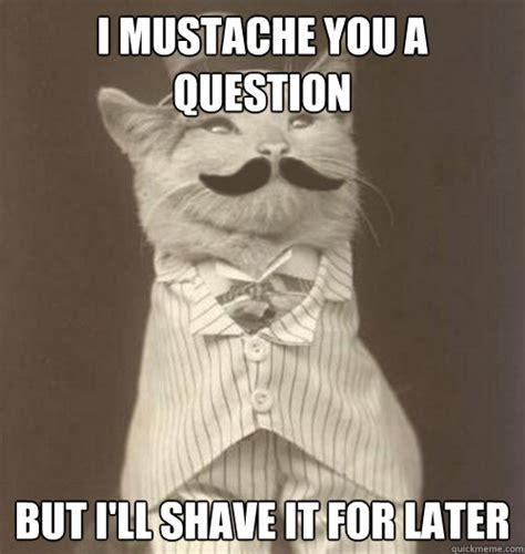 Shaved Cat Meme - i mustache you a question but i ll shave it for later