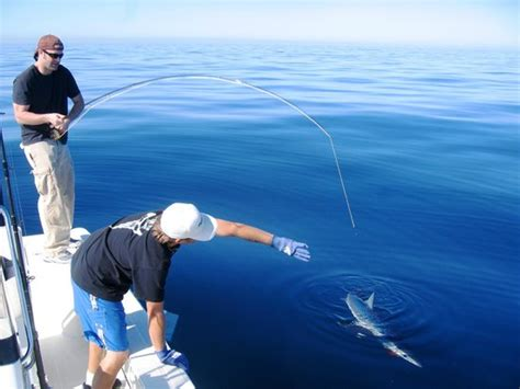 mako boats san diego big ol mako picture of on the fly fishing charters san