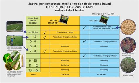 Pupuk Organik Mp Pro jadwal aplikasi agen hayati mmc agrokompleks mmc