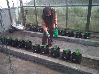 Pupuk Organik Yang Mengandung Boron pentingnya pupuk mikro dan aplikasinya my garden story