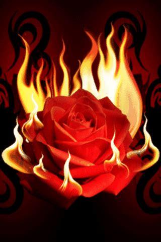 imagenes de love con movimiento y brillo rosas rojas con movimiento y brillo para google plus
