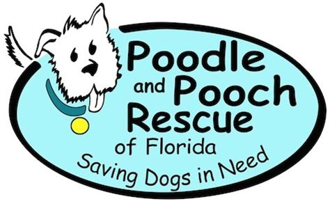 adoption orlando poodle and pooch rescue pet shelter in orlando fl