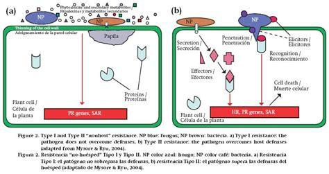 Pathogen Detox by Mechanisms Of Resistance In Postharvest Fruit Pathogen