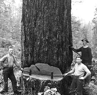 kinsey brothers photographs of the lumber industry and the